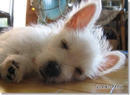 無邪気に眠るアレックス